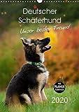 Deutscher Schäferhund - unser bester Freund (Wandkalender 2020 DIN A3 hoch): Schäferhundwelpen entdecken die Welt (Geburtstagskalender, 14 Seiten ) (CALVENDO Tiere)