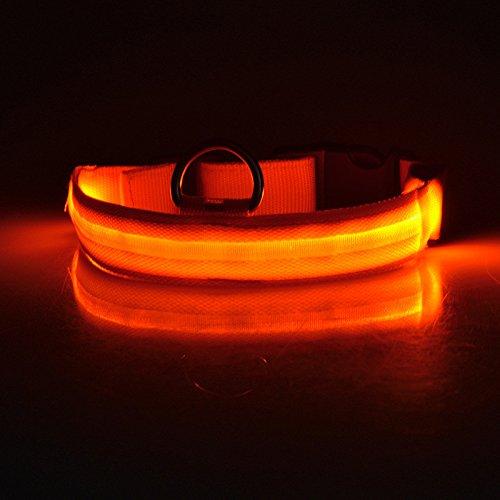 Winnes LED Hundehalsband mit USB Wiederaufladbar Blinkender LED Hunde Sicherheits Halsband Nacht Hundeband für Hunde, Haustier (XL 2.5cm X (52cm-60cm), Orange)