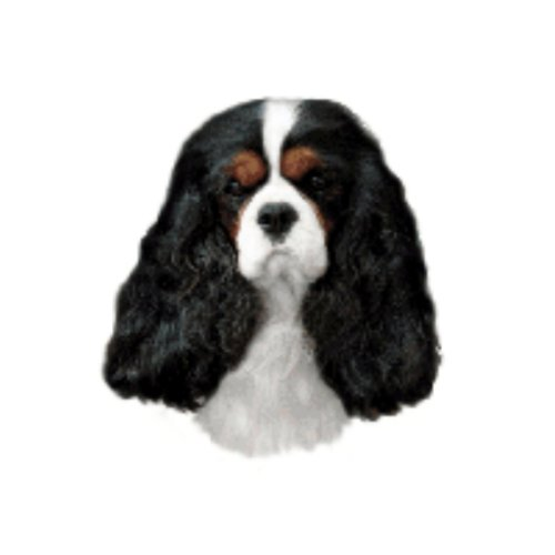 World Stickers Sweden AB Autocollant Cavalier King Charles Spaniel Tricolore taille medium
