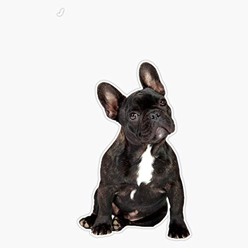 French Bulldog Vinyl Waterproof Sticker Decal Car Laptop Wall Window Bumper Sticker 5'