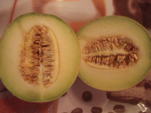 Galia Melone (Zuckermelone) 10 frische Samen (Zum selber Züchten)