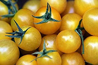 golden sweet cherry tomato plants