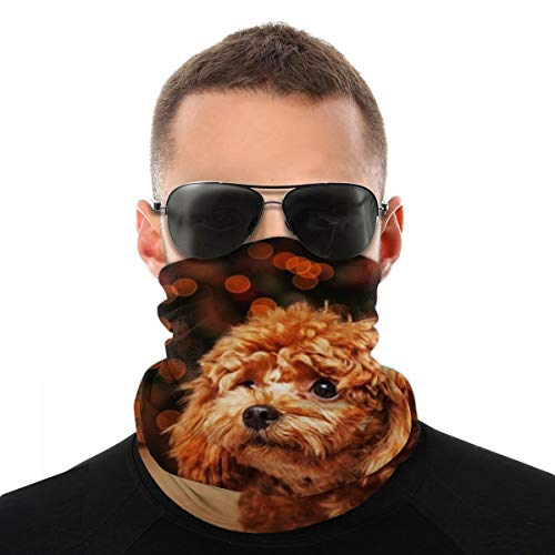 Cute Puppy Poodle Multifunctional Headwear Face Covering Headband Neck Gaiter