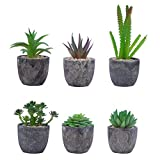 BELLE VOUS Set de 6 Mini Plantas Artificiales Suculentas Plantas Decorativas Falsas con Macetas, Planta Artificial Decorativa Ideal para el Hogar, Oficina, Lavabo, Decoración de Mesa y Bodas