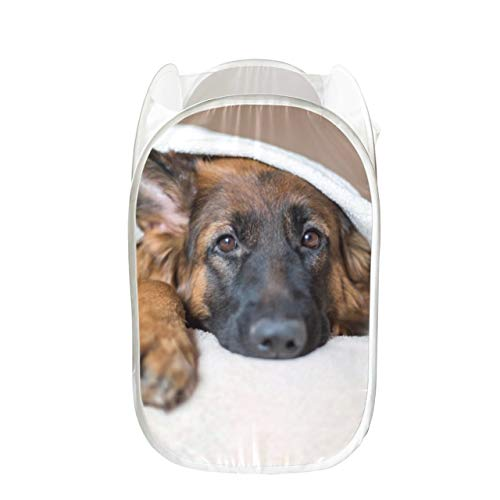Girl Hampers for Laundry Cute German Shepherd in A Blanket On Bed Picture I Sturdy Decorative Laundry Basket Collapsible for Storage and Easy to Open Pop-up Mesh Colorful Laundry Basket