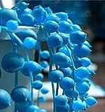 Elwyn 120pcs Blue Pearl Chlorophytum Plant Seeds