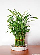 Sale!100pcs/bag Rare Chinese lucky bamboo Seeds 20 variety B