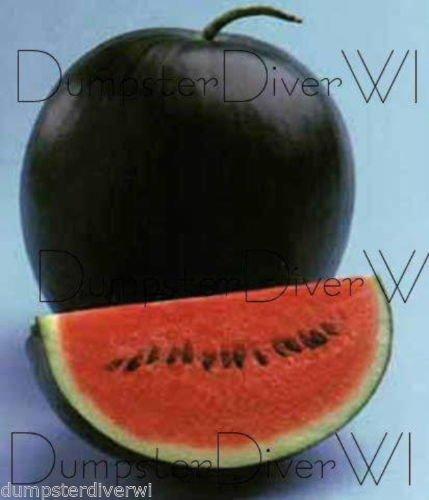 Sugar Baby Heirloom Melon d'eau 20 graines Super Sweet rapide Récolte non-ogm organique