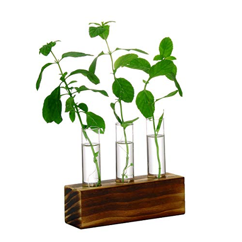 Ivolador Kristallglas-Reagenzglas, für Pflanzenterrarium, Vase, Blumentöpfe für Hydrokultur-Pflanzen, Heim, Garten, Dekoration