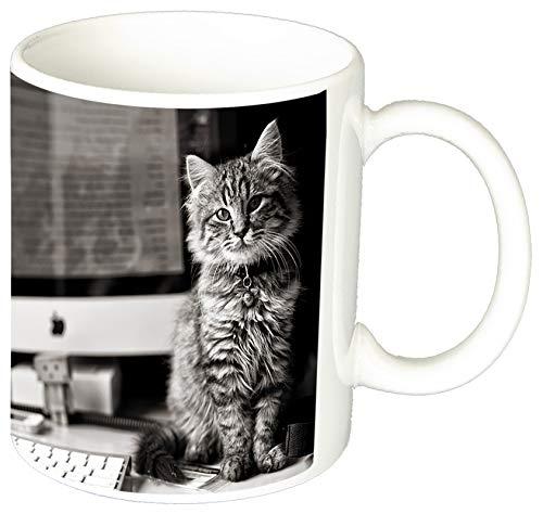 Gatitos Gatos Kittens Cats M Tasse Mug