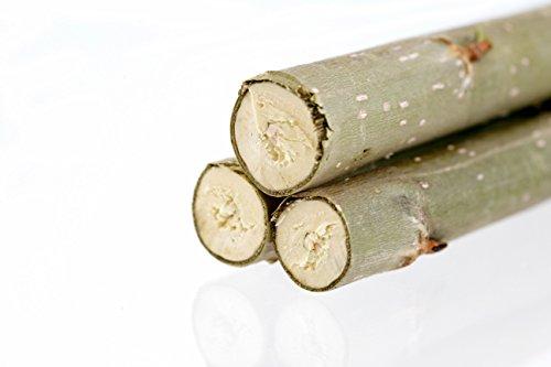 Energieholz-Pappelsteckling für Energiewald-u. Kurzumtrieb-Pflanzungen/KUP, zur Hackgut/Hackschnitzel-Erzeugung (200 MAX 4 Pappelstecklinge)