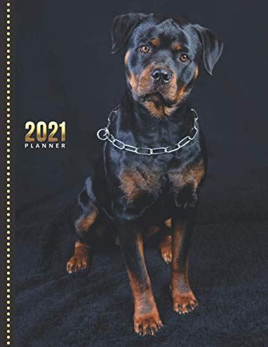2021 Planner: Rottweiler Dog Photo / Daily Weekly Monthly / Dated Life Organizer Notebook / Full Size 8.5x11 Book with Flexible Cover / 12 Month ... December / Cute Christmas or New Years Gift