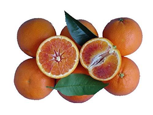 Frische Sizilianische Bio Orangen Tarocco 14kg (sehr süß). Unbehandelte und erntefrische Bio-Orangen aus Sizilien.