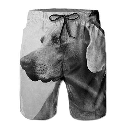 Zhengzho Herren Badehose Hund Labrador Lustiger Tierhund Surfing Beach Board Shorts Badebekleidung