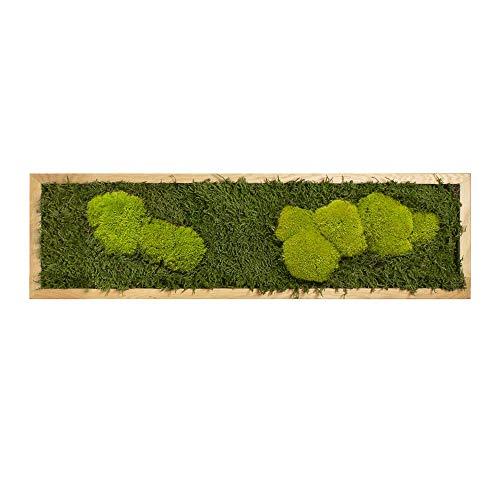 Moos Moos Manufaktur Moosbild mit Waldmoos & Kugelmoos - Bildgröße 70 x 20 cm mit Tischler-Holzrahmen aus geölter Eiche