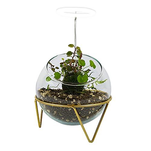 PlantMyTank Wabi Kusa Set Décoration de Table d'aquarium Plantes de Mousse Verre Plantes Aquatique Florarium Lampe...