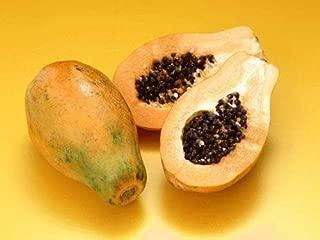 Jmbamboo-hawaiian Papaya Live Plant Great Tropical Trees Large 6
