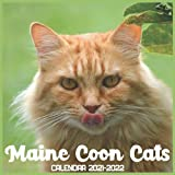 Maine Coon Cats Calendar 2021-2022: April 2021 Through December 2022 Square Photo Book Monthly Planner Maine Coon Cats, small calendar