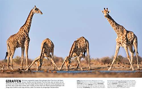 Tiere: Die Vielfalt der Tierwelt in 1.500 Bildern - 7