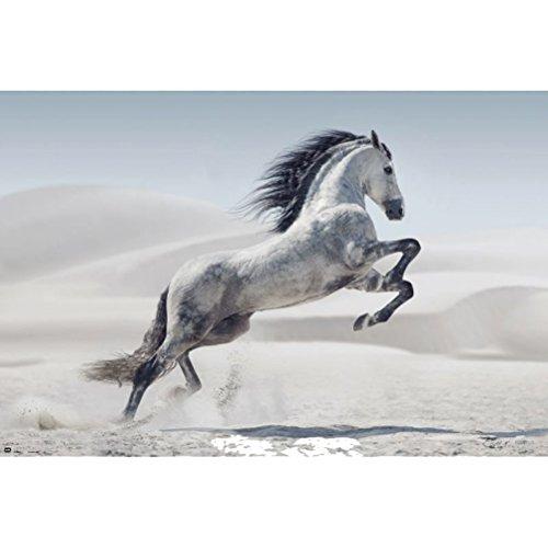 Grupo Erik Editores andalusischen Pferd–Poster, 61x 91.5cm