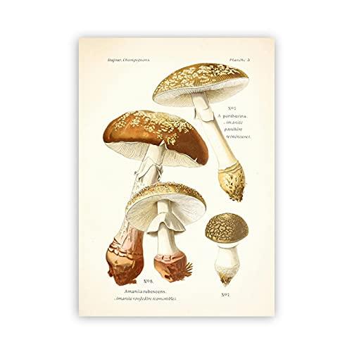 Weijiajia Carteles botánicos de Hongos Vintage e Impresiones de Atlas de Lienzo Retro Comestible y venenoso, 50x70 cm (19,68x27,55 in) F-905