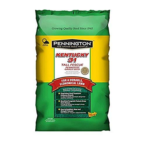Pennington Kentucky 31 Tall Fescue Grass Seed, 5 LB