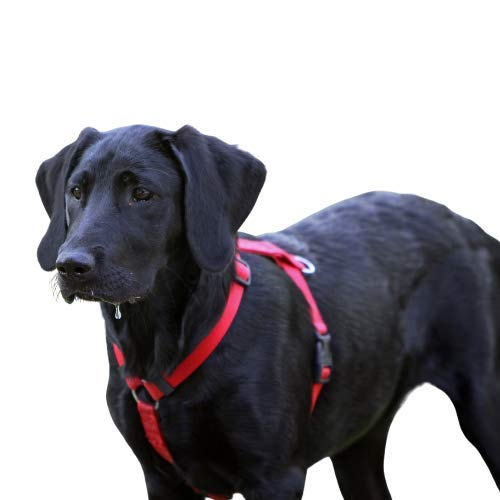 Resppet Arnés para Perro. Arnés para Perro en Forma de H, Color Rojo. (L)