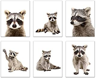 Minimalist Raccoon Prints - Set of 6 (8x10) Unique Adorable Trash Panda Poses and Angles Nursery Photography Wall Art Decor