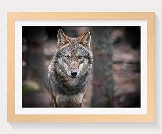木製フォトフレーム 写真フレーム 木製の枠 装飾画( 灰色オオカミ、捕食者、肖像画、ボケ味 ) 壁掛け 壁飾り 壁ポスター おしゃれ ウォールアート アートパネル 壁の絵 インテリア絵画 額縁 部屋飾り 贈り物 プレゼント 30x40cm