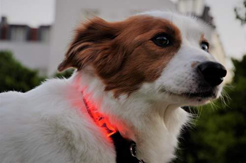 Mister Zoo Collar de perro LED reflectante súper brillante, diseño decorativo, seguridad y alta visibilidad, funciona con pilas para perros pequeños y medianos (verde)