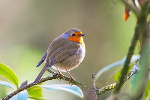 1000 stukjes puzzel Leuke Robin vogel, spel puzzel speelgoed houten puzzel 75x50cm