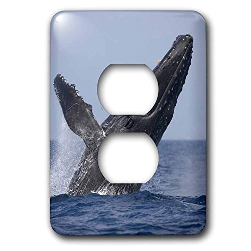 Duplex Receptacle Outlet Wallplate 1 Gang Outlet Covers Hawaii Big Island Humpback Whale Breaching Classic Beadboard Wall Plate Decorator Unbreakable Faceplate