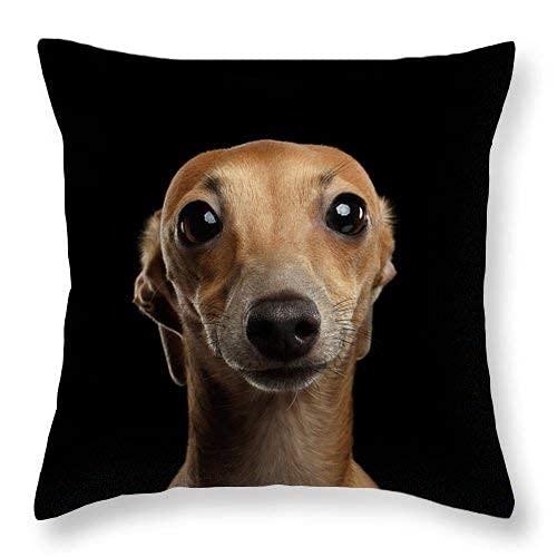 Closeup Retrato de Perro Galgo Italiano Mirando a cámara Aislado Negro Fundas de Almohada de Lino de algodón Cuadrado Decorativo Tiro Funda de cojín 16 x 16