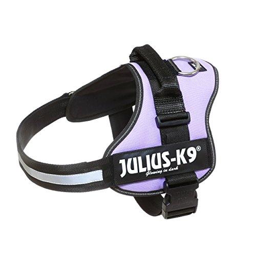 Julius-K9 Powerharness, purple, Size 2