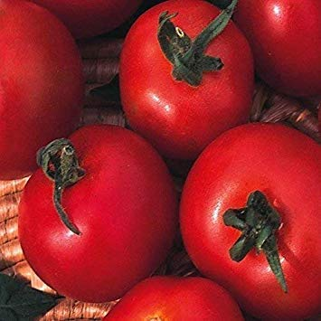 SANHOC Graines Paquet: Graine SeeKay légumes Collection 15 Variétés - Minimum 6700 SeedsSEED