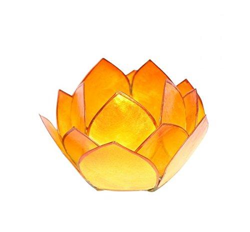 Lotus-Licht Abendsonne gelb-orange