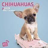 Chihuahuas 2020: Original Myrna-Kalender [Mehrsprachig] [Kalender] (Wall-Kalender)