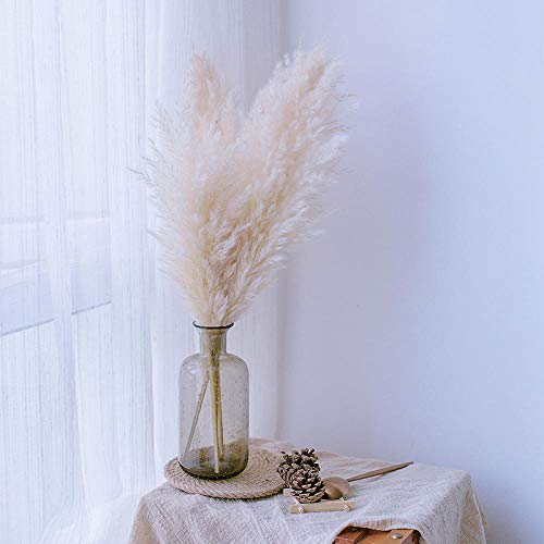 pah-macy Pampasgras, natürlich getrocknet - Plant Wedding Flower Bunch for Home Decorations vom Hochzeitstrend zum Interior-Liebling! (Naturfarben)-10 cremefarbenes Pampasgras_Getrocknete Knospe