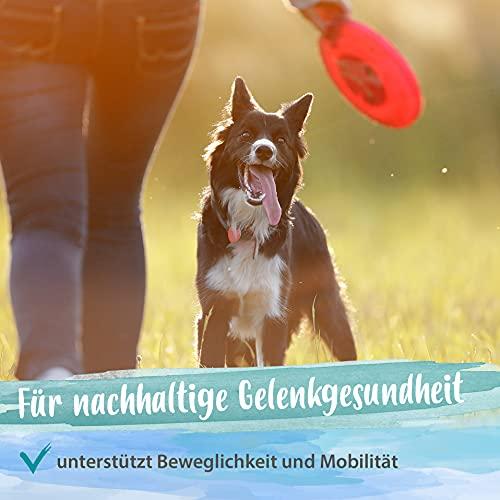 Ida Plus Artisan forte - Gelenktabletten für Hunde - Grünlippmuschel, MSM, Glucosamin & Teufelskralle unterstützen Hunde-Gelenke & Gelenkfunktion - Gelenktablette Hund ausreichend für bis zu 60 Tage