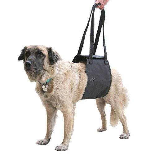Dog Harness How to