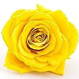 Rosen-Te-Amo 6 Infinity gelbe Rosen-Köpfe dazu unsere exklusiven Deko-einleitung; Konservierte...