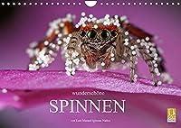 Wunderschoene Spinnen (Wandkalender 2022 DIN A4 quer): Die verborgene Schoenheit der Spinnen (Monatskalender, 14 Seiten )