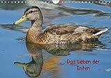 Das Leben der Enten (Wandkalender 2021 DIN A4 quer)