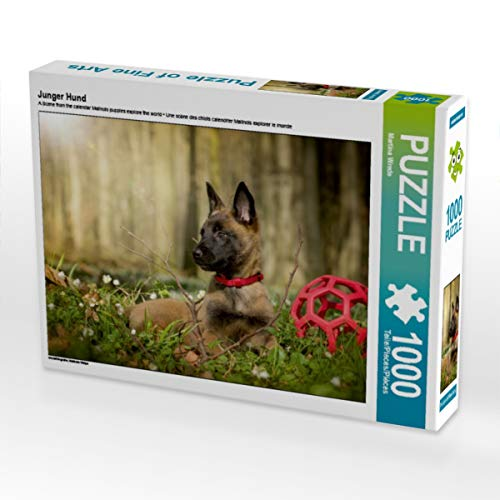 CALVENDO Puzzle Junger Hund 1000 Teile Lege-Größe 64 x 48 cm Foto-Puzzle Bild von Martina Wrede
