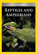 Best reptile church video Reviews