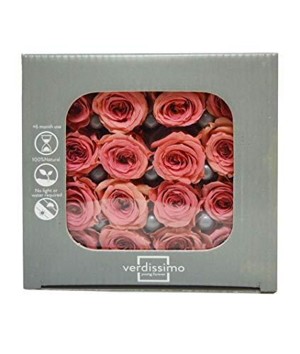 Verdissimo Rose STABILIZZATE Mini X16 Special (Rosa Scuro)