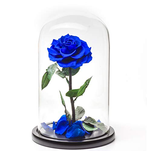 VidaRosa2007 Premium Preserved Real Rose in Glass Dome Gift Eternal Flower Gift for Her Birthday...