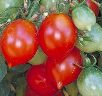 FERRY Keim Seeds: 30 Samen von Riesentraube - Tomaten Fruited