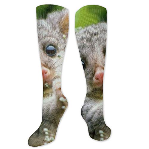Cute Opossum Baby Polyester Cotton Over Knee Leg High Socks Outdoor Unisex Thigh Stockings Cosplay Boot Long Tube Socks for Sports Gym Yoga Hiking Cycling Running Soccer