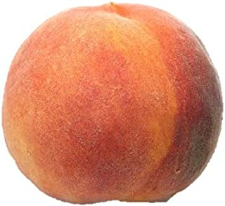 Contender Peach Tree - Healthy - Established - One Gallon Trade Potted - 1 Each by Growers Solution